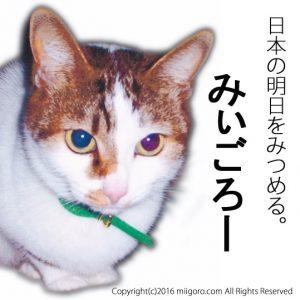 catposter01